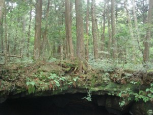 aokigahara-japans-suicide-forest-1