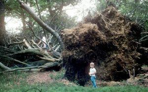1987_tree_2714292b